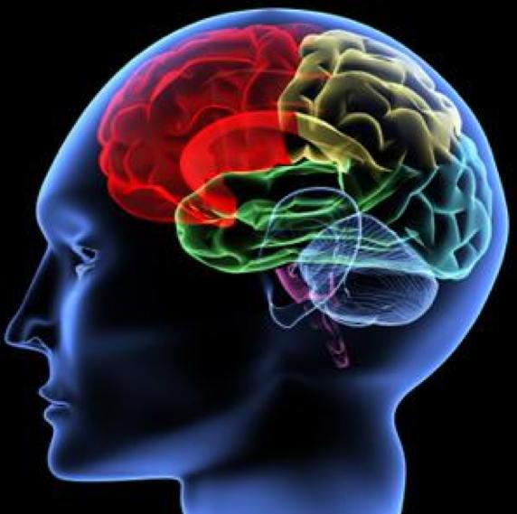 brain - ADHD Explosion book